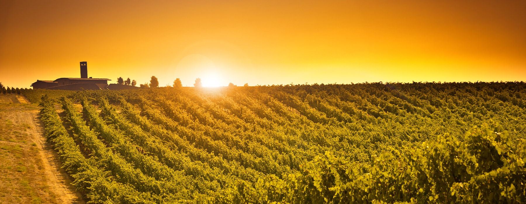 Beautiful sunset over a winery